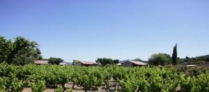 Gîtes Vignes entre rhône et alpes bis.jpg