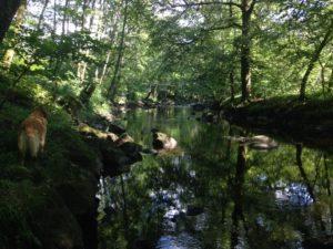 ABDC la correze riviere.jpg
